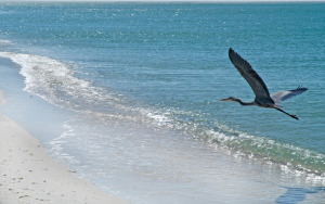 Port Charlotte, FL Beaches - Island Coast Transportation