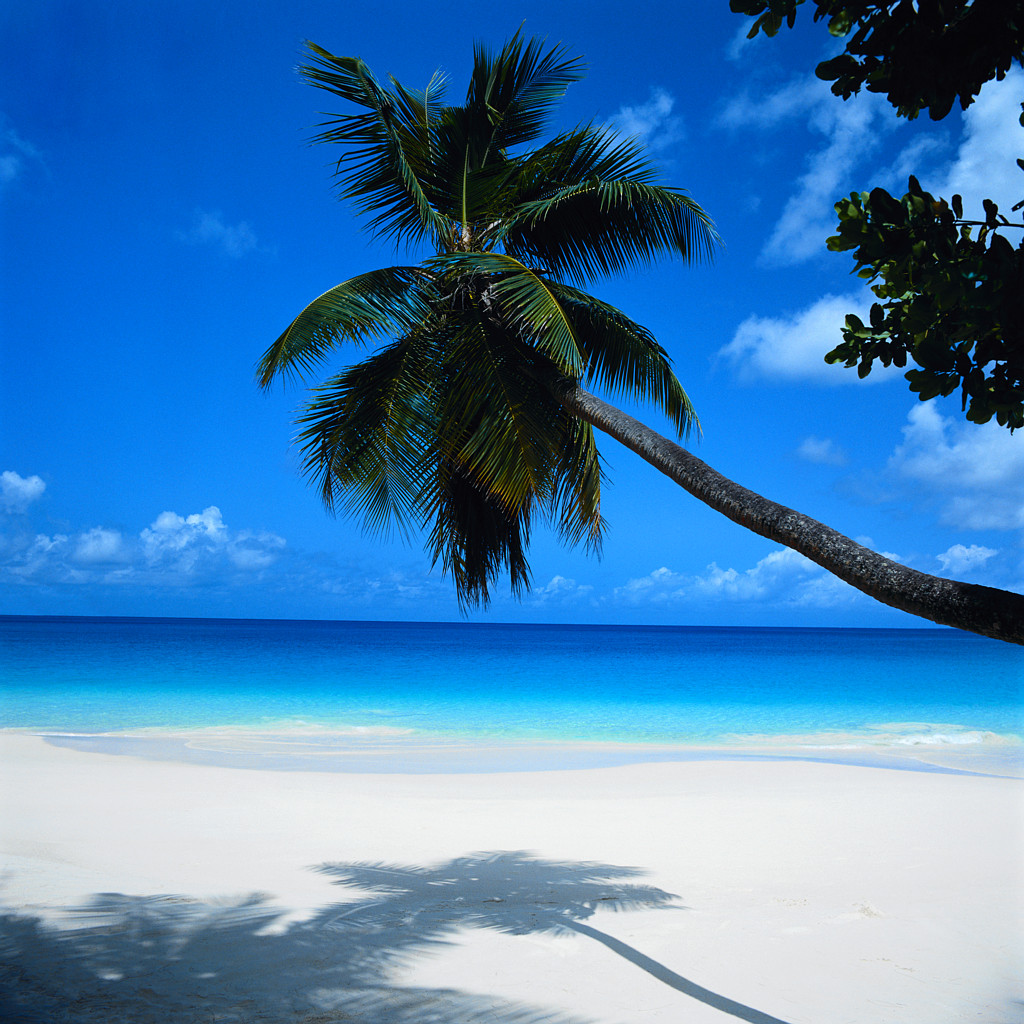 Palm Tree Leaning over Beach